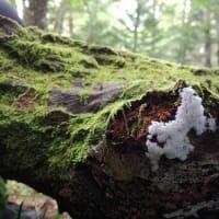スタッフのねんきん問題 The world of slime mould