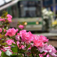 薔薇はなぜという理由なしに咲いている。  シレジウス