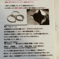 柴犬の迷子(福岡県久留米市)