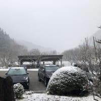 今日は、雪が降りました。