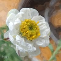 ハナカンザシ - 絵画風
