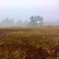 芳ヶ平湿原その4
