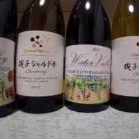 高麗人参畑と葡萄畑と鞠子ワイン