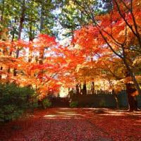 信州・長野市 昌禅寺の紅葉もキレイですヨ・・・・・・!