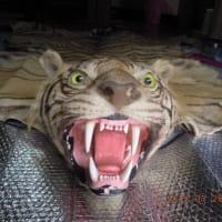 トラ、虎、トラ