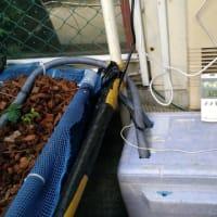 イチゴ栽培(2)