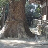 デッカイ木には、太い根。
