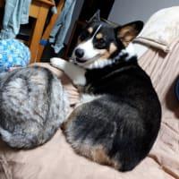 20190616の猫たちと時々犬