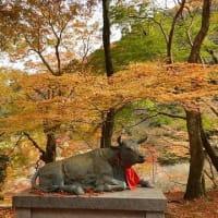 和泉葛城山(関百)☆紅葉&小滝巡り(12月3日)