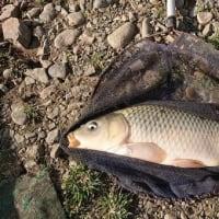 白石金魚園の鯉釣りへ