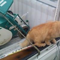 猫をなめるなよ