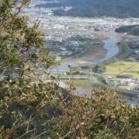 大仁城山に登る。