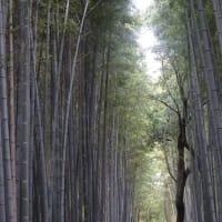 京都一周トレイルⅥ(槇ノ尾~鳥居本~竹林の小径~渡月橋~松尾山~上桂駅)