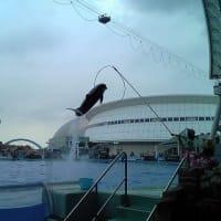 名古屋港水族館に行った