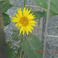 街角に咲く花📷街角ぶらり旅07-30