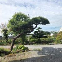 手間の掛かる我家の樹木たち