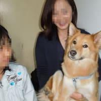 栗橋多頭飼育崩壊犬のキャロルちゃんが・・・