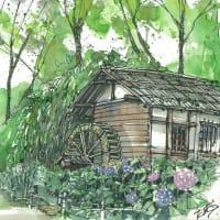 アジサイの水車小屋 (府中市郷土の森博物館)