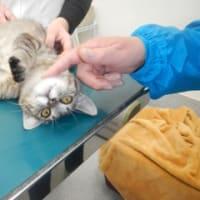エーちゃんと、はるかちゃんの風邪治療と検査