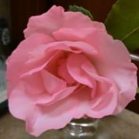 春バラの花束♪そろそろ終了、次は紫陽花咲くかな