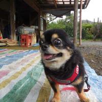 派犬リポーター☆モミスリサスケ☆