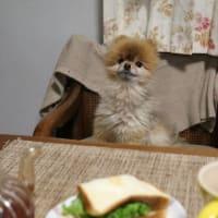 サンドイッチら!