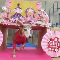 幼稚園体験にきてくれたMIX(マルチーズ×チワワ)の【ララちゃん】 犬のしつけ教室@アロハドギー