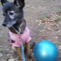 公園の ボールが怖い 風愛ちゃんだ
