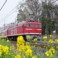EF8195特集/配給列車(3)