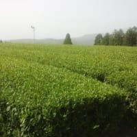 お茶の達人道場のお知らせ。