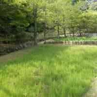 新緑の鎌倉中央公園に鯉のぼりが泳ぐ