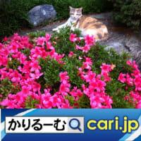 2019年11月分鈴木社長の日誌・日記・備忘 cari.jp