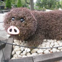 豚のトピアリー
