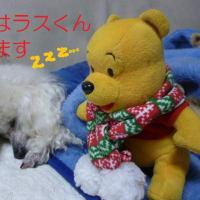 今日も真冬のように寒い東京…┌[ ゚д゚ ]┐ カキーン