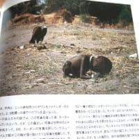 世界に衝撃を与えた鳥の写真