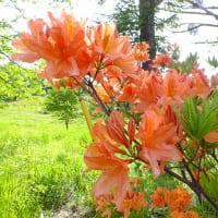 平成28年5月31日(火) 烏帽子岳で花見♪
