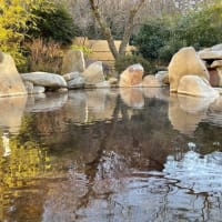 箱根の標高差&今日の温泉風景♨