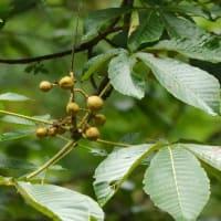 樹木の多様性