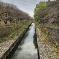 晩秋の善福寺川
