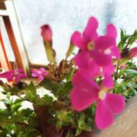 陽だまりの花リレー