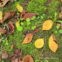 紅葉の始まり:桜並木