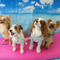 人&犬の温熱療法《温玉施術体験会》開催しました。【ALOHA塾】  犬のしつけ教室@アロハドギー