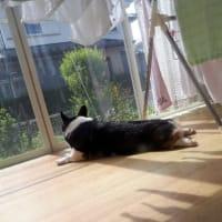 20190421の猫たちと時々犬
