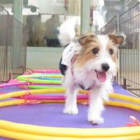 11月の【パピーパーティー】スケジュールです(*^-^*)  犬のしつけ教室@アロハドギー