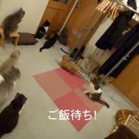 5月10日 福猫茶房さんが閉店・・・!