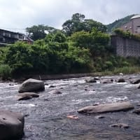 昨夜の地震影響なく狩野川へ