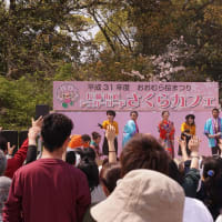 おおむら桜まつり桜カフェ  2019・4・7