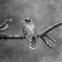 野鳥撮影事始め(世界編)