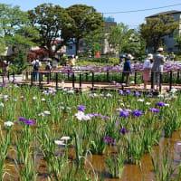 #0039 -'19. 堀切菖蒲園の花しょうぶ(6月13日の日記)