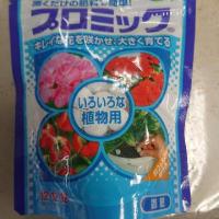 New 八重咲き金魚草!まぁー可愛い!&雨の日p